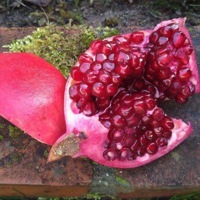 Granatapfelkerne im Garten auf Ziegelstein mit Moos