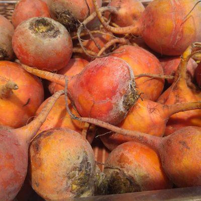 Orange Rüben regional, saisonal, biologisch, frisch